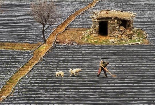 Fotoğraf Sanatçısı Konyalı bu fotoğrafla altın madalya kazandı
