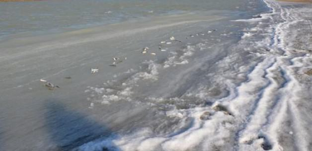 Göksü Deltası'nda balıklar bile dondu