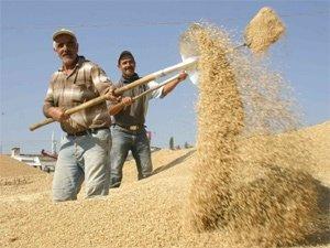 Borsada buğday 91 Kuruş
