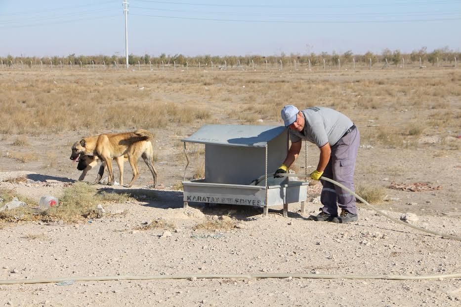 Karatay Belediyesi Sokak Hayvanları İçin Doğaya Yem Bıraktı