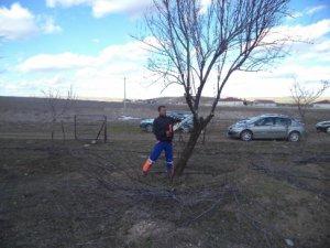 Cihanbeyli'de Ağaçlar Budanıyor!