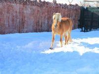 Karatay'da Hayvanlar Soğuktan Kış Stresine Isıtmalı Önlem