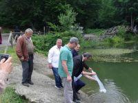 Sazan Balığı Yavruları Düzce'deki Göletlere Bırakıldı